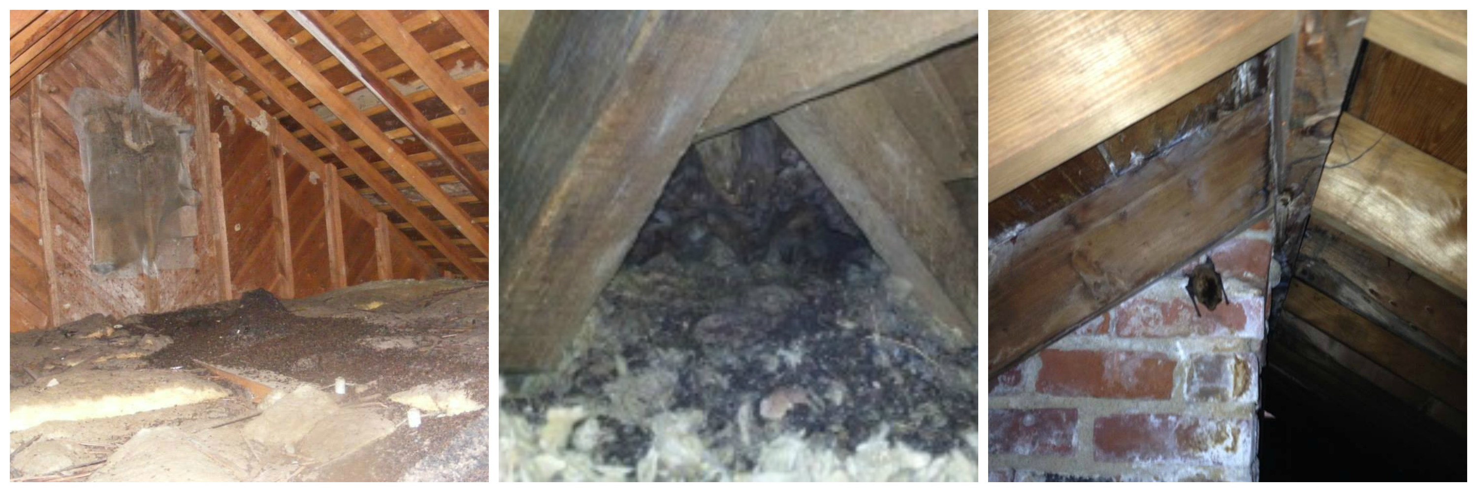 Photo: Attic Damage Images at Attic Remediation Animal Waste Removal Page.