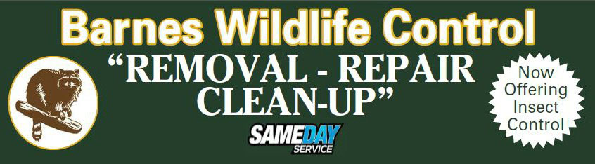 Graphic: Same Day Service for Kettering Wildlife Removal