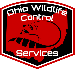Our Blog: Ohio Wildlife Control