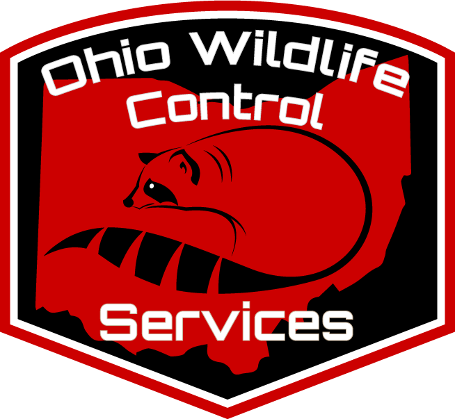 Ohio Wildlife Control
