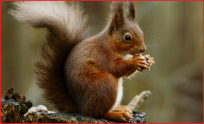 Tiffin Wildlife Animal Removal Squirrel Photo