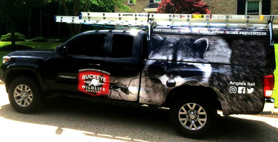 Photo: Buckeye Wildlife Solutions Truck Photo at Attic Remediation Animal Waste Removal page